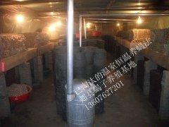 国内蝎子养殖大户中国最大的蝎子养殖场基地