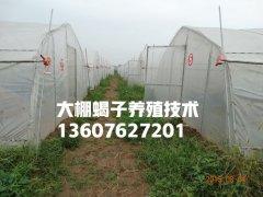 郏县蝎子养殖基地蝎子养殖加盟最新合作方案