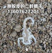 参观蝎子养殖场不能看装修,亚洲城唯一官网技巧