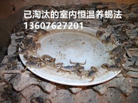 亚洲城唯一官网培训总结,给蝎子喂水喂食物过程