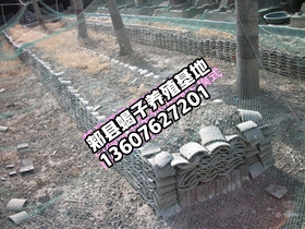 <b>蝎子养殖怎么起步,小蝎子饲养方法</b>