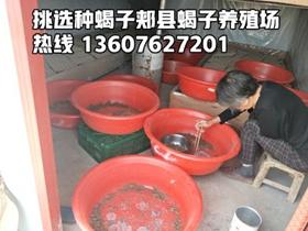 蝎子养殖官网介绍亚洲城唯一官网