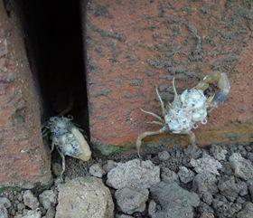 郏县蝎子养殖基地种蝎子养殖场,种蝎子价格