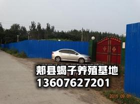 中国最大的蝎子养殖基地,养蝎子怎么合作加盟